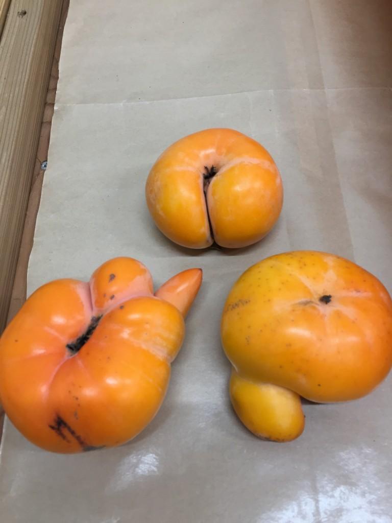 愛嬌たっぷり柿
