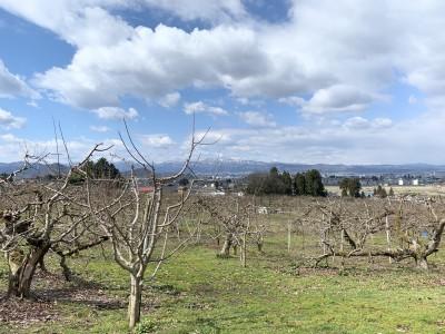 3月下旬のりんご畑