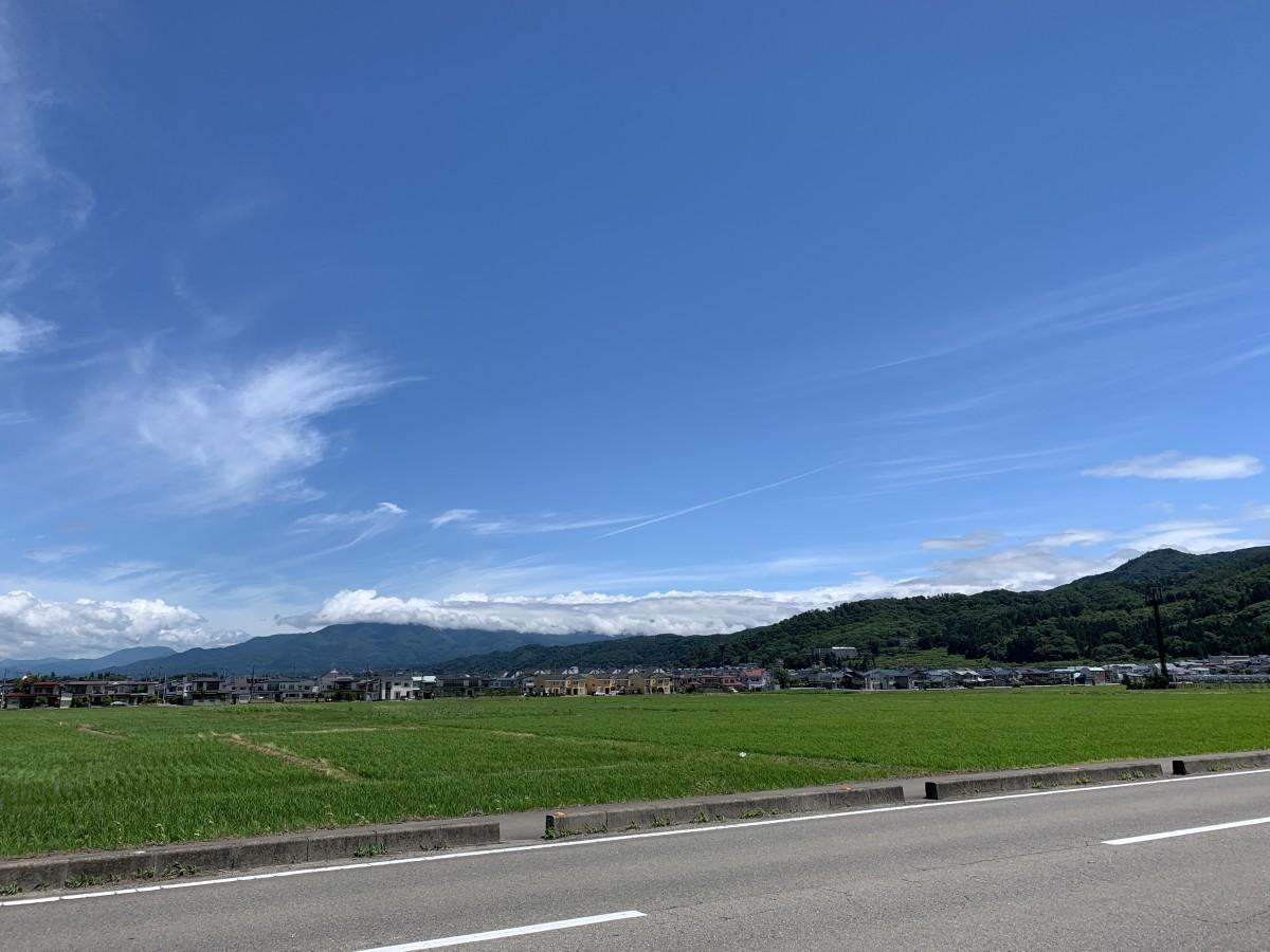 6月下旬の田